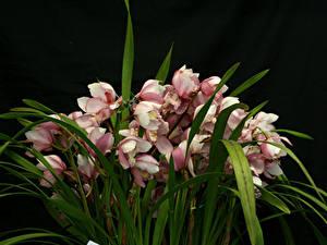 Bilder Orchideen Viel Schwarzer Hintergrund Blumen