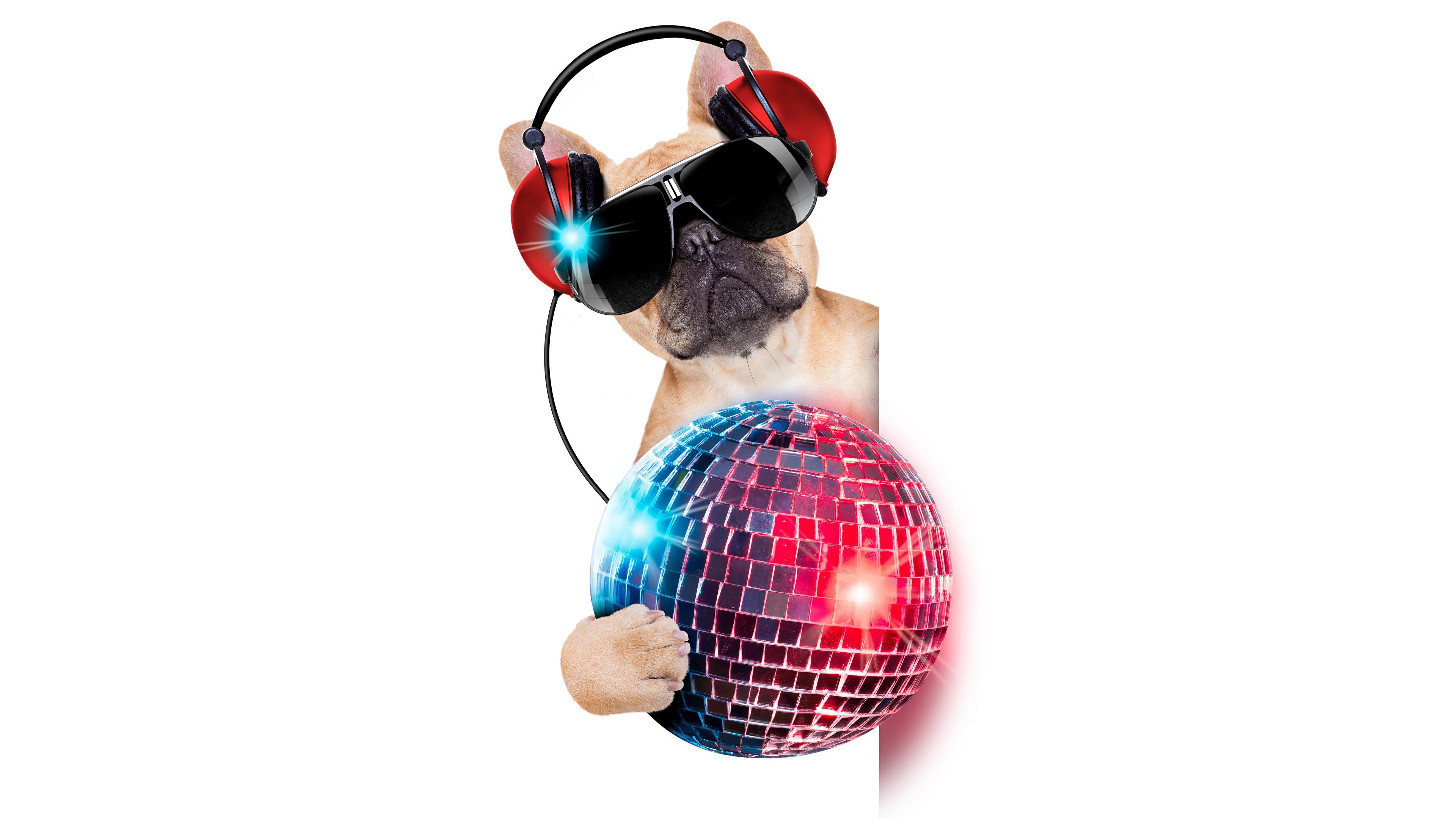 Photo French Bulldog Dogs Funny Balls Glasses Animals 3840x2160