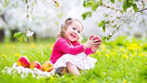 Bilder Äpfel Blühende Bäume Kleine Mädchen Lächeln Ast Sitzend Kinder