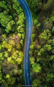 Fotos Wälder Straße Von oben Bäume Natur