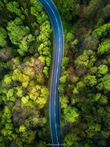 Fotos Wälder Straße Von oben Bäume