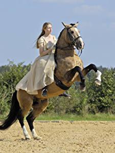 Fotos Pferdesport Pferde Kleid Sport Mädchens