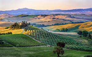 Hintergrundbilder Italien Toskana Landschaftsfotografie Felder Hügel Bäume