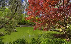 Fotos USA Garten Teich Washington Ast Spokane Japanese Garden
