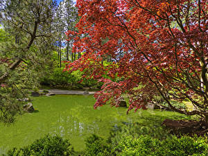 Fotos USA Garten Teich Washington Ast Spokane Japanese Garden Natur