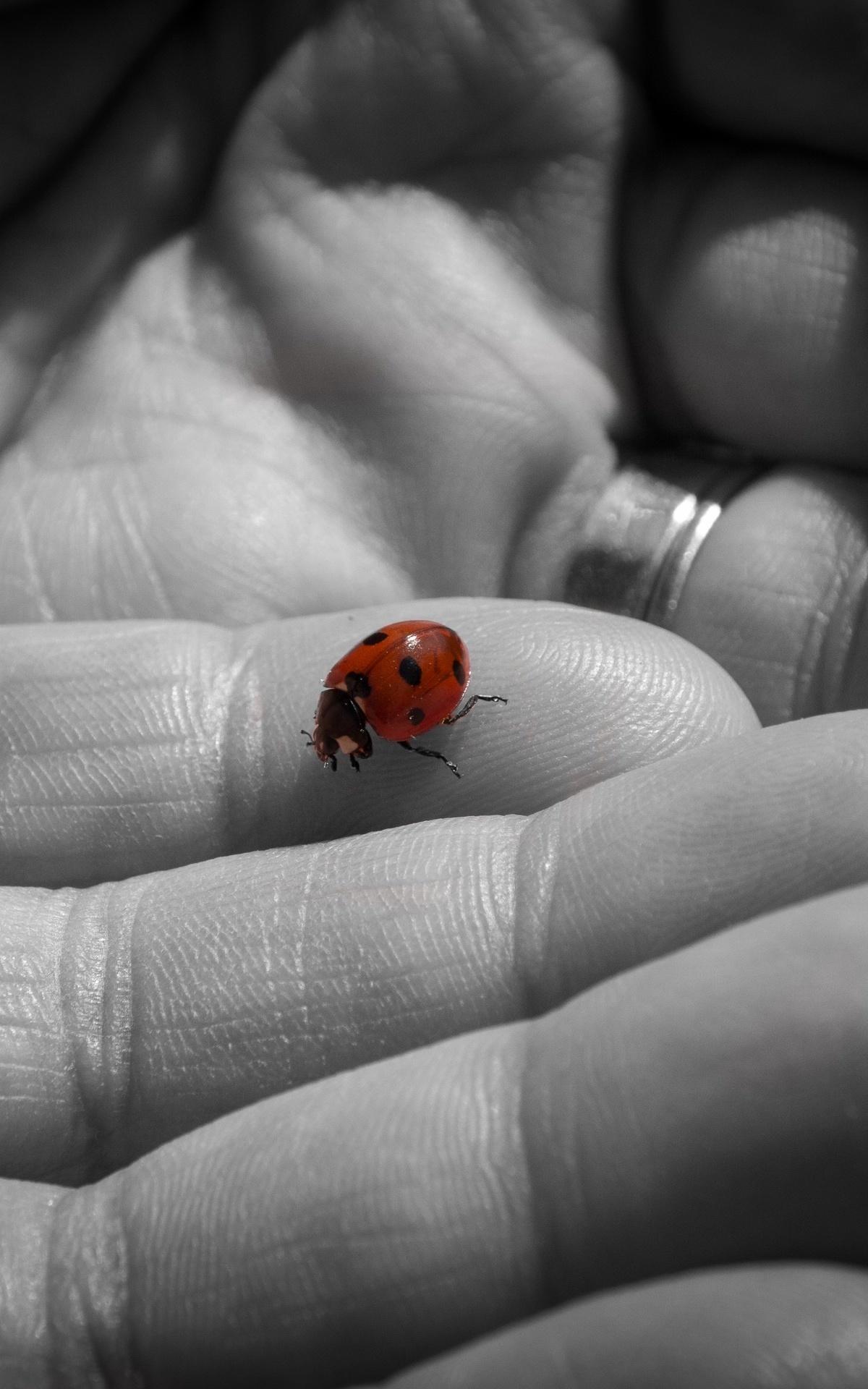 Bilder Marienkäfer Finger Tiere Großansicht 1200x1920