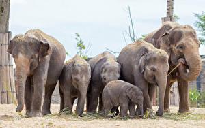 Fotos Elefanten Jungtiere