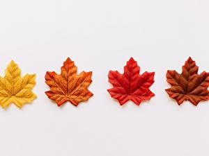 Bilder Blattwerk Ahorne Grauer Hintergrund Gelb Rot Orange Braun
