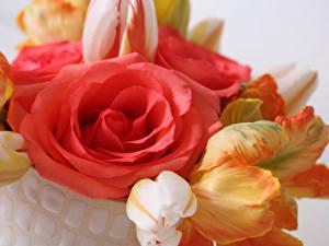 Fotos Rosen Tulpen Hautnah Blüte
