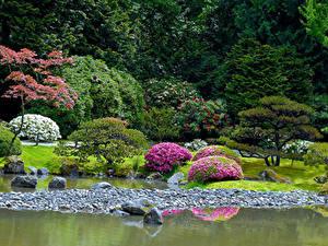 Fotos Vereinigte Staaten Seattle Park Teich Steine Design Strauch Seattle Japanese Garden Natur