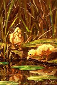 Hintergrundbilder Vögel Teich Entenvögel Jungtiere Gezeichnet Küken