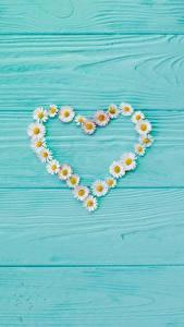 Desktop hintergrundbilder Valentinstag Kamillen Herz Vorlage Grußkarte Bretter