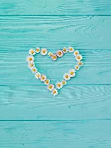 Fotos Valentinstag Kamillen Herz Vorlage Grußkarte Bretter