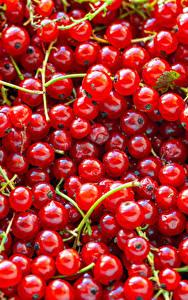 Bilder Textur Meertrübeli Rot
