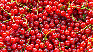 Bilder Textur Meertrübeli Rot das Essen
