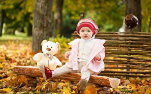 Fotos Herbst Knuddelbär Kleine Mädchen Blick Sitzen Mütze Kinder