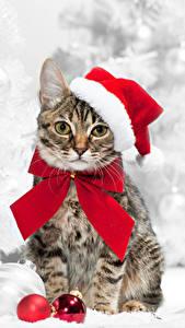 Fotos Neujahr Katzen Mütze Kugeln Blick Schleife Tiere