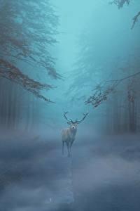 Wallpapers Forests Deer Fog Fantasy Animals
