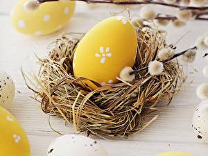 Fotos Feiertage Ostern Ei Nest Ast