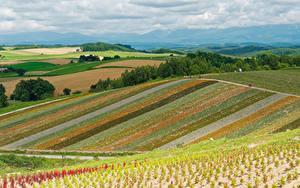 Fotos Japan Landschaftsfotografie Felder Himmel Hokkaido