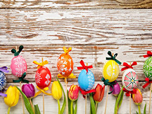 Fotos Feiertage Ostern Tulpen Ei Bretter Schleife Design Blumen