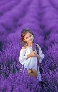 Fotos Felder Lavendel Kleine Mädchen Blick Zopf Kinder