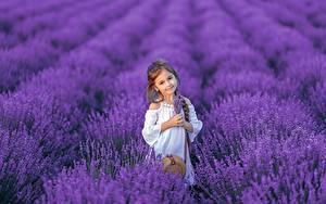 Fotos Felder Lavendel Kleine Mädchen Blick Zopf