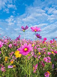 Hintergrundbilder Grünland Himmel Schmuckkörbchen Blüte