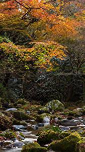 Fotos Japan Herbst Parks Stein Bäche Bäume Laubmoose Hananukikeikoku Valley