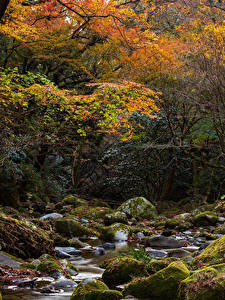 Image Japan Autumn Parks Stones Stream Trees Moss Hananukikeikoku Valley