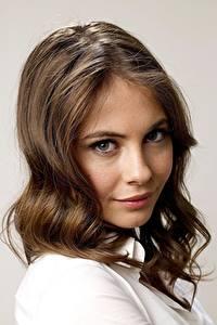 Hintergrundbilder Willa Holland Grauer Hintergrund Starren Braunhaarige Haar Frisuren Prominente Mädchens
