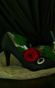Hintergrundbilder Rosen Stöckelschuh Parfüm