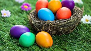 Hintergrundbilder Feiertage Ostern Eier Nest Gras