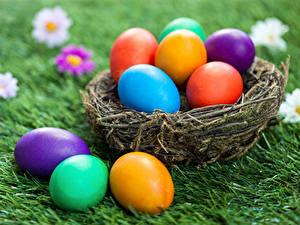 Hintergrundbilder Feiertage Ostern Ei Nest Gras
