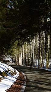Fotos Winter Wälder Wege Schnee Bäume Fichten