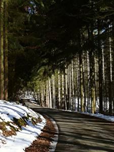 Fotos Winter Wälder Wege Schnee Bäume Fichten Natur