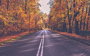 Fotos Herbst Straße Wälder Bäume