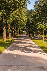 Hintergrundbilder Schweiz Park Bäume Allee Kannenfeldpark
