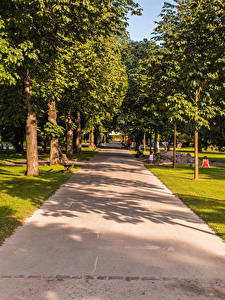 Wallpaper Switzerland Parks Trees Allee Kannenfeldpark Nature
