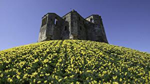 デスクトップの壁紙、、イングランド、城、廃墟、スイセン、丘、Warkworth Castle、