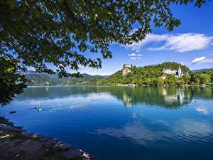 Bilder Slowenien See Ente Ast Lake Bled