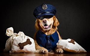 Fotos Hunde Golden Retriever Der Hut Polizei Tiere
