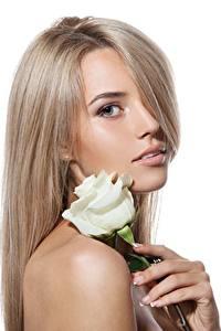 Bilder Rose Schön Weiß Weißer hintergrund Dunkelbraun Mädchens