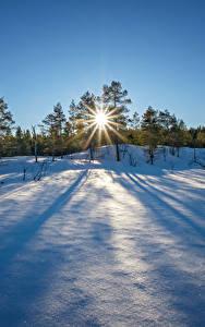 壁纸、、冬、朝焼けと日没、雪、木、太陽、