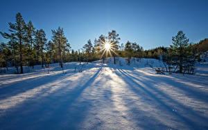 Fotos Winter Sonnenaufgänge und Sonnenuntergänge Schnee Bäume Sonne