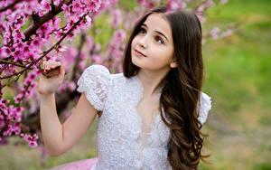 Hintergrundbilder Blühende Bäume Kleine Mädchen Hand Schön Kinder