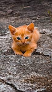Images Cat Red orange Kittens Animals
