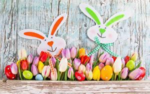 Bilder Ostern Kaninchen Tulpen Blumen