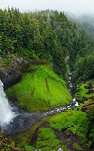 Fotos Wasserfall Vereinigte Staaten Felsen , Andrew Coelho, Salt Creek Falls Natur