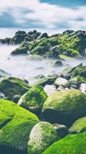 Bilder Steine Küste Laubmoose